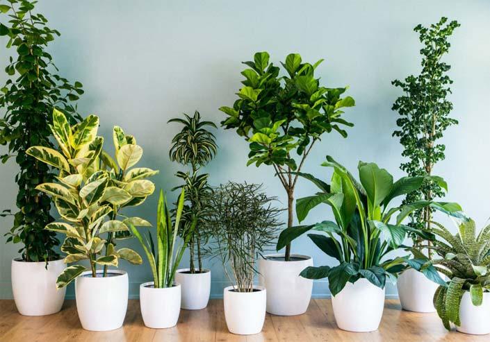 گیاهان تصفیه کننده هوا به پیشنهاد ناسا