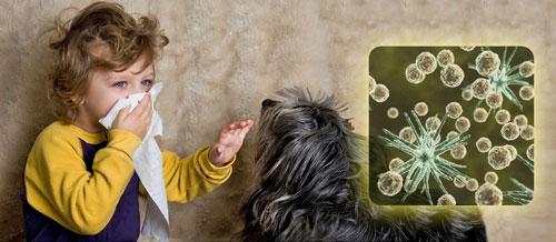 آلودگی مو و شوره پوست حیوانات خانگی