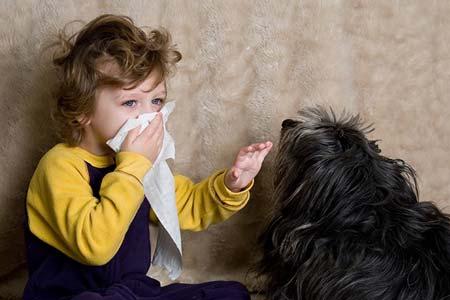 آلرژی و حساسیت به سگ و گربه