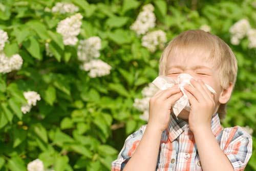 آلرژی و حساسیت گرده افشانی